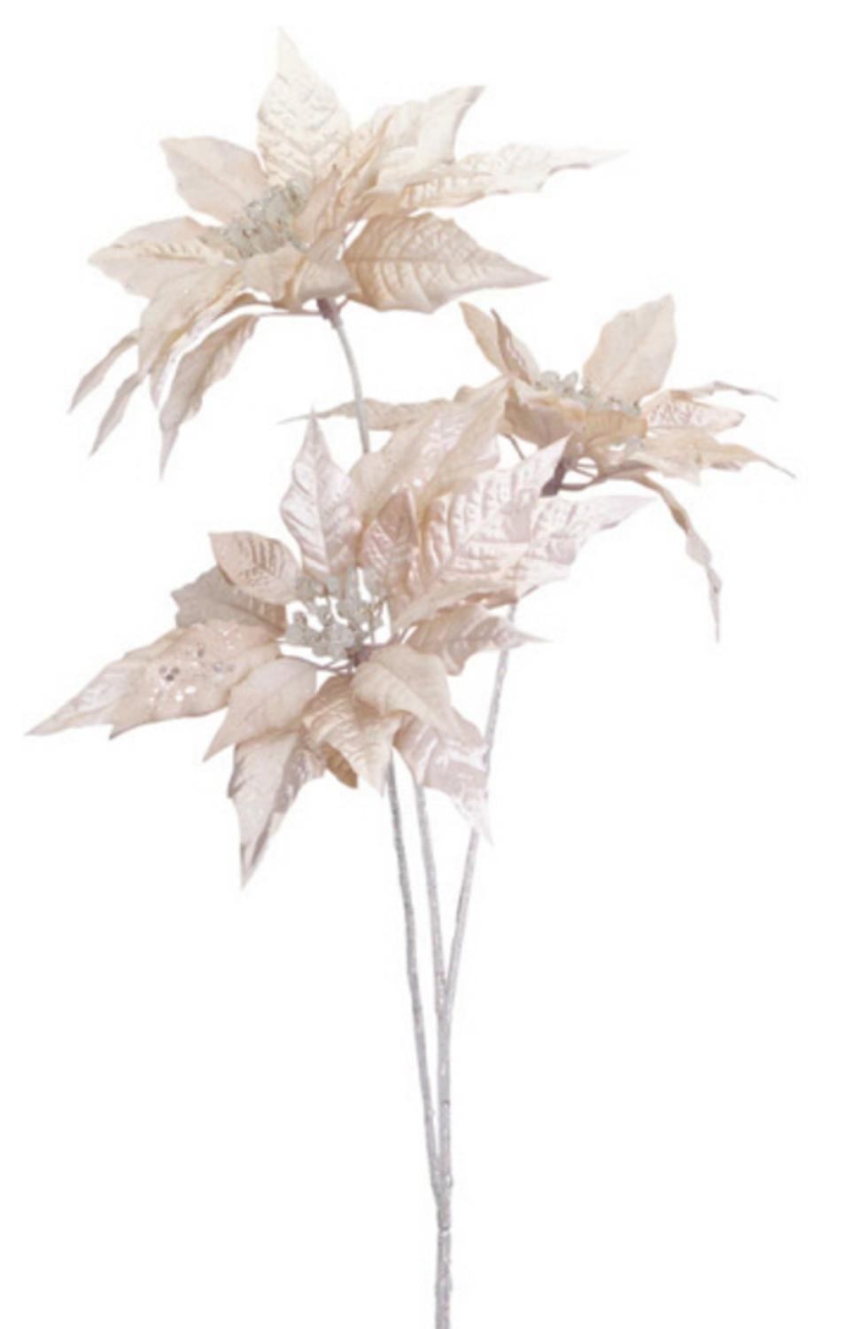 Champagne Gold Poinsettias Pack of 6