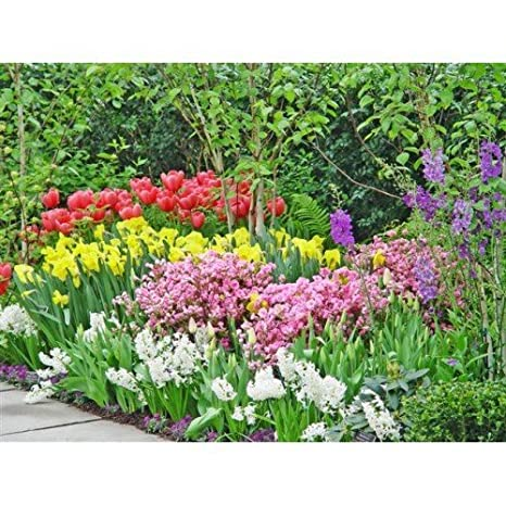 Amazon 45 days of spring flower bulb collection garden outdoor 45 days of spring flower bulb collection mightylinksfo