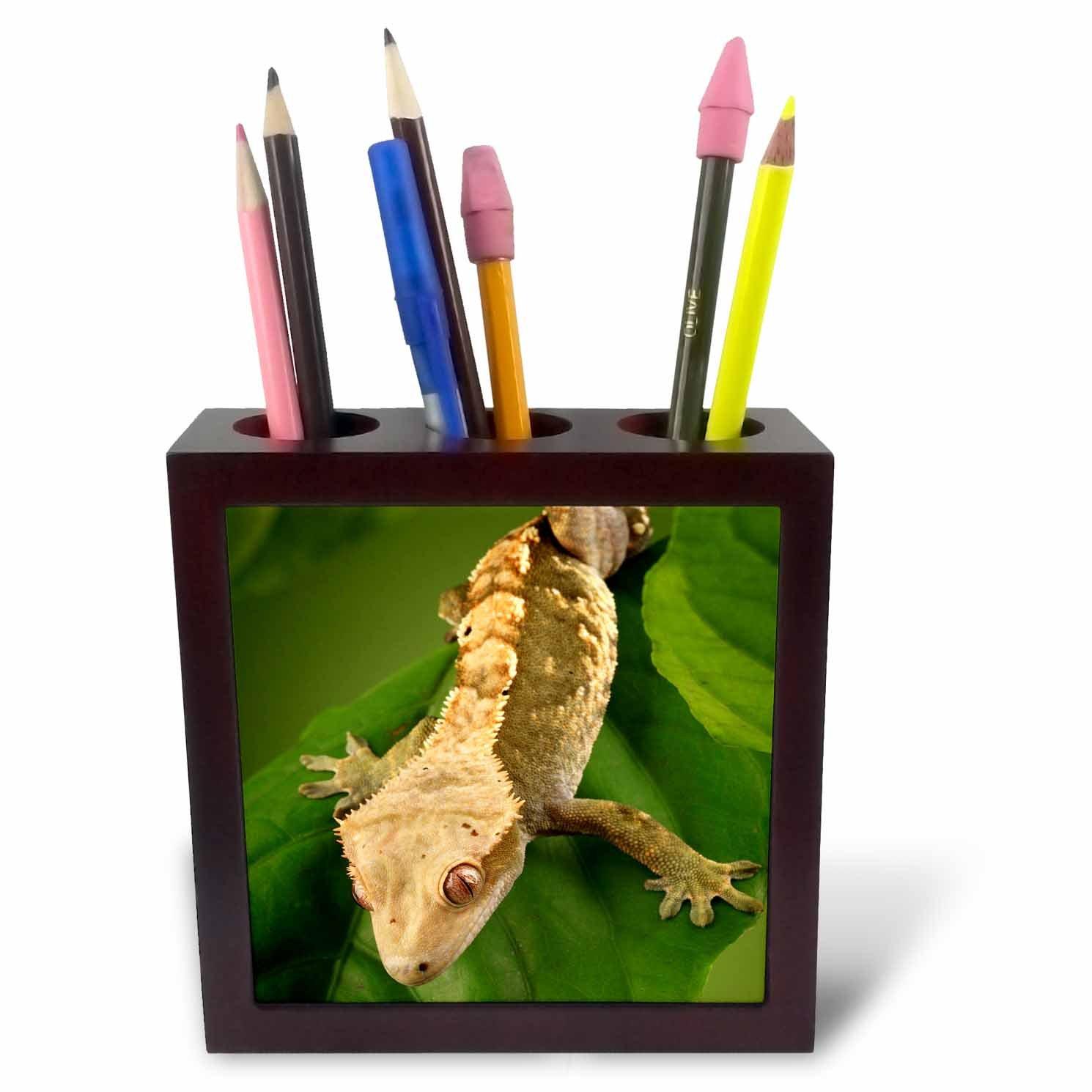 3dRose ph/_84105/_1 Caledonian Crested Gecko lizard Maresa Pryor NA02 MPR0086 Tile Pen Holder 5-Inch