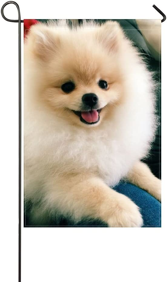 Amazon Com Wbsndb Garden Flag Animal Dog Pomeranian Fluffy Small Puppy Adorable Pet Cute 12x18 Inches Without Flagpole Garden Outdoor