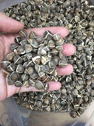 dried-herbs-dried-food-moringa-tree-seeds-la-mu-zi-free-worldwide-air-mail-100-grams