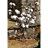 """Cotton Stems or Branches 20"""" Tall with 11-13 Cotton Bolls per Stem for Rustic Farmhouse Decor"""