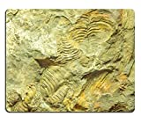 Liili Mouse Pad Natural Rubber Mousepad IMAGE ID 33254568 Fossils of brachiopods oldhamina
