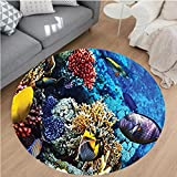 Nalahome Modern Flannel Microfiber Non-Slip Machine Washable Round Area Rug-nt Corals and Fishes in the Red Egyptian Sea Sharm El Sheikh Africa Print Blue Red Yellow area rugs Home Decor-Round 75''