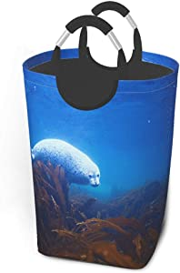 Collapsible Laundry Baskets,Dirty Laundry Hamper,Tropical Laminaria Sea Lions,Seal,Colapsable Laundry Basket Metal Handles,Dorm Collaspable Laundry Basket Fabric For Camp Travel Kids Baby Girl Boy