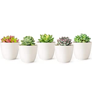 Mkono 4.5 Inch Plastic Planters Indoor Set of 5 Flower Plant Pots Modern Decorative Gardening Pot with Drainage for All House Plants, Succulents, Flowers, Herbs, and Seeding Nursery, Cream White