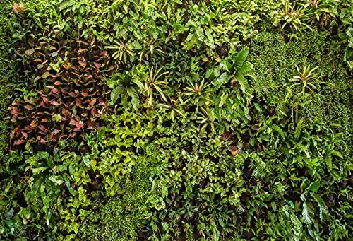 Green Leaves Wall Background 10x6.5ft Tropical Plants Polyester Photography Backdrop Flora Wall Foliage Weed Fern Nature Scenery Holiday Party Park Decor Baby Newborn Photo Prop Studio Wallpaper