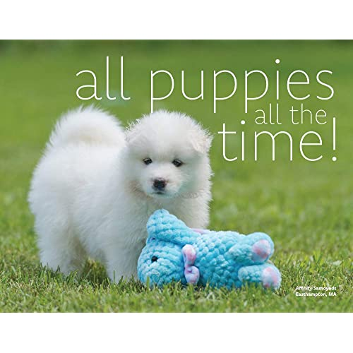 How much are Samoyed Puppies? Get the Best Deal for a Pooch you'll Love