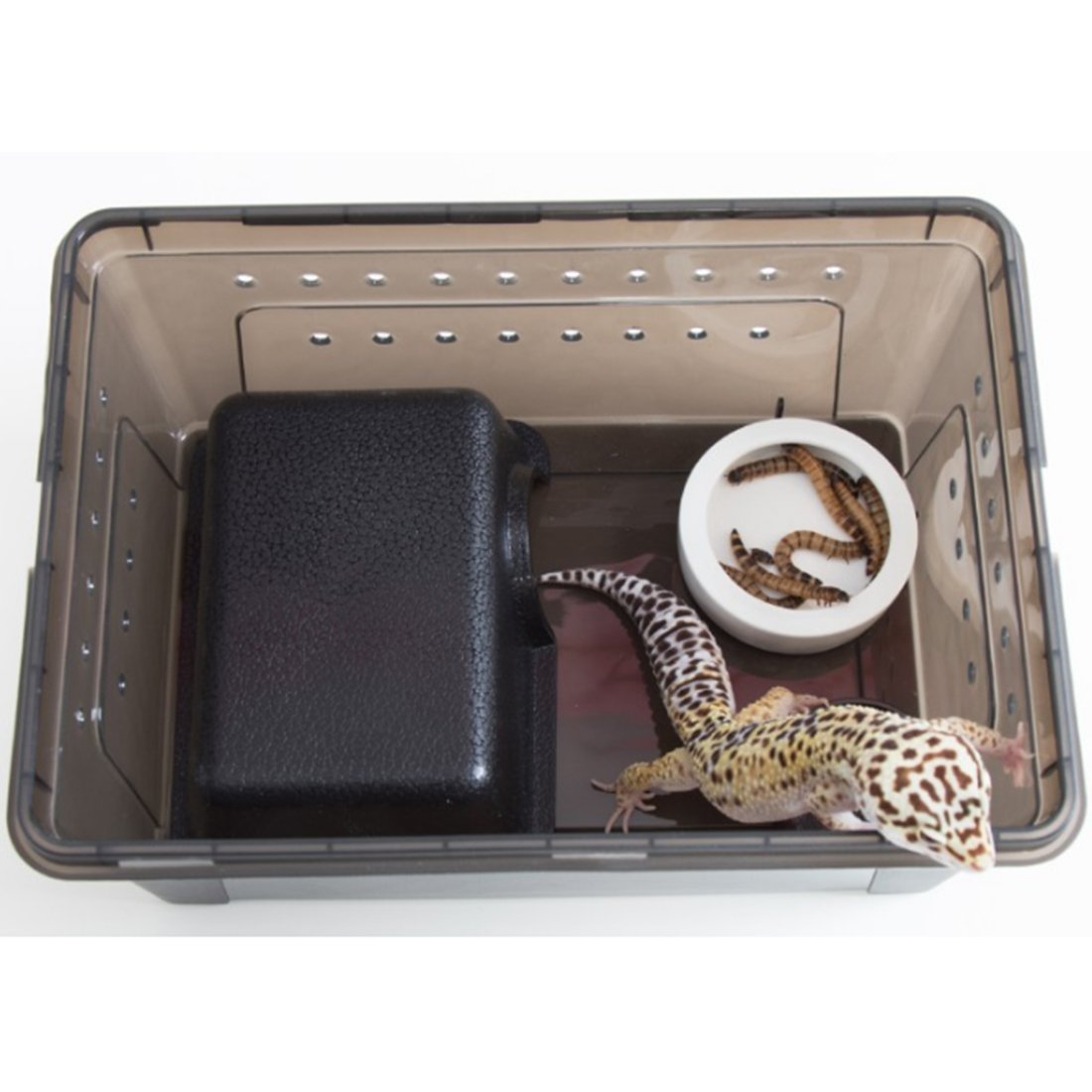 Fcoson Rectangle Feeding Box Transparent Reptile Cage Hatching Container for Spider Lizard Frog Cricket Turtle Crab Snack Black by Fcoson (Image #2)