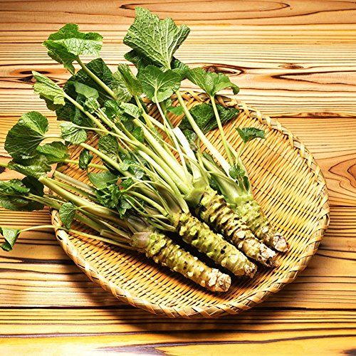 - 200pcs/lot Wasabi Seeds, Japanese Horseradish Seed Vegetable Seeds Bonsai Plant DIY Home Garden Plants