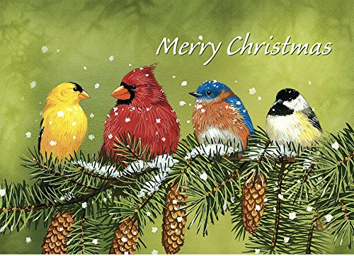 "Tree-Free Greetings Christmas Cards and Envelopes, Set of 10, 5"" x 7"", Snowy Feathered Friends (HB93321)"