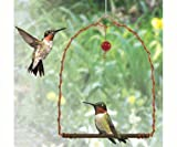 Songbird Essentials SEHHHUMS Copper Hummingbird