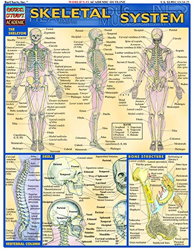 Skeletal System (Quick Study Academic)