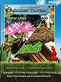 Garden Travels - Water Lilies - Honey