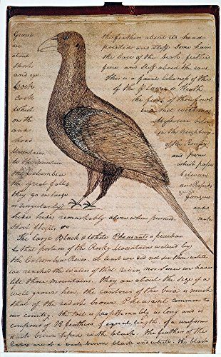Lewis & Clark Bird 1806 Ndrawing Of A Sage Grouse By William Clark And His Transcription Of Comments By Meriwether Lewis In An Entry Dated 2 March 1806 From ClarkS Journal Of The Lewis And Clark Exped ()