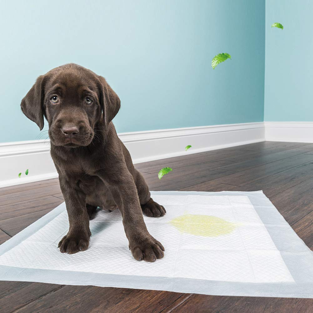 Gorei Pet Potty Training Pee Pads for Dog and Puppy 200-Count 33x45CM