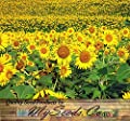 200 PEREDOVIK Sunflower Seeds ~ Game Birds & Deer Favorite~ PLOT FOOD WILDLIFE ~