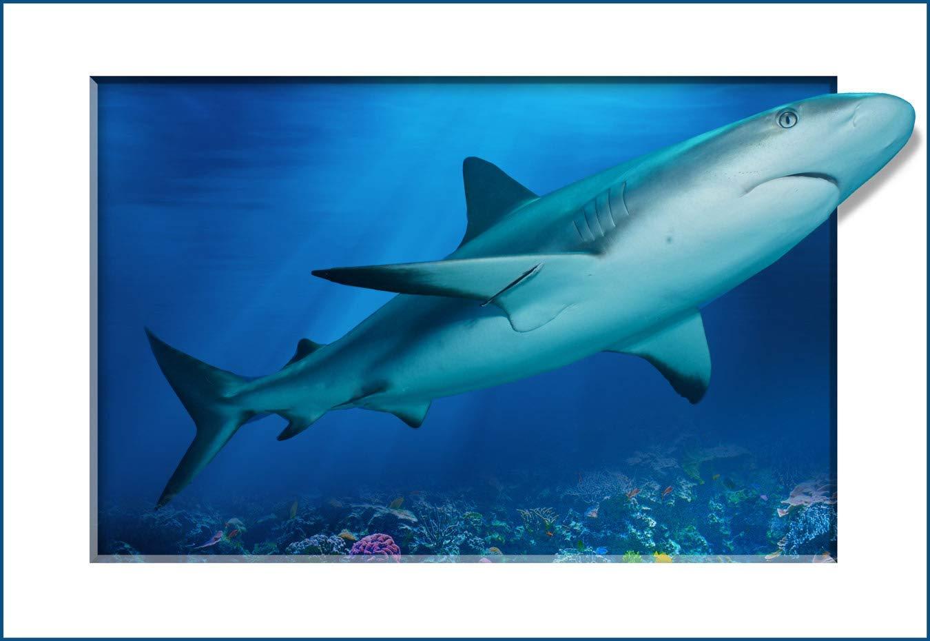 Blacktip Shark Lurking