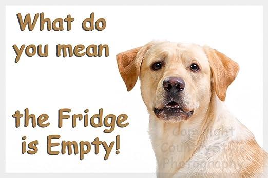Amarillo de oro de perro Labrador divertido del imán del ...