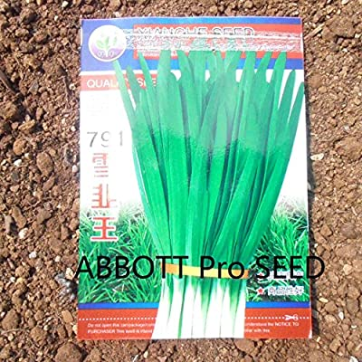 Chinese Chives Vegetable Seed Meticulous Selection of Fine Varieties Disease Resistance Easy Plants ABBOTT