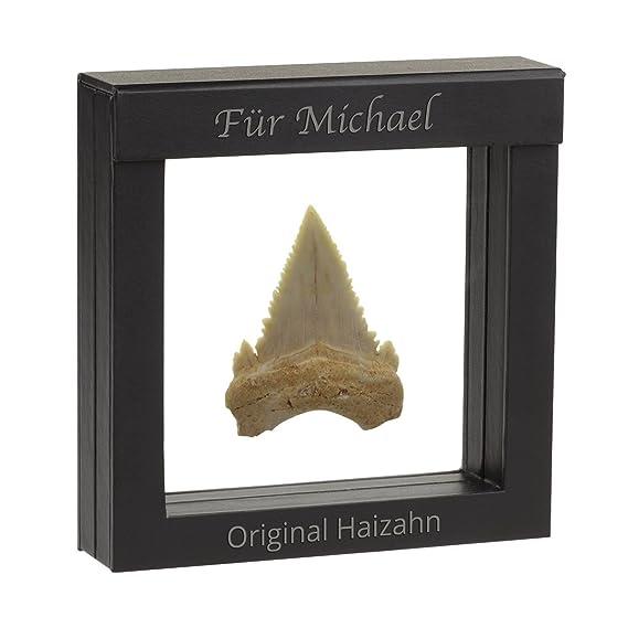 Original Fossiler Hai-Zahn mit Personalisierung - Tolle Geschenkidee aus der Urzeit mit persönlicher Gravur im Schwebe-Rahmen