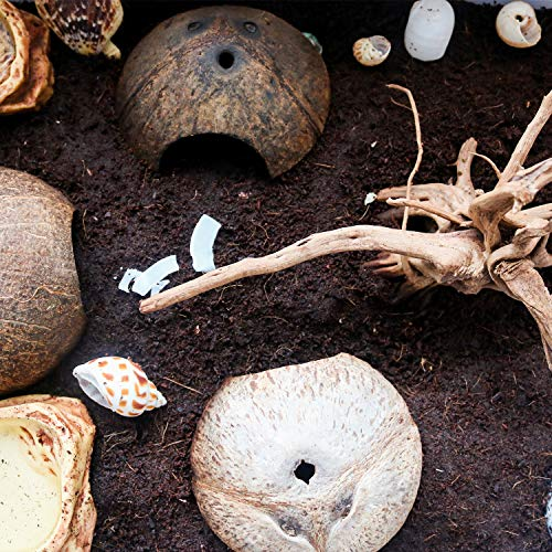 Hermit Crab Shells/Turbo Shells/15Pcs Assorted Turbo Shells and 1Pcs Natural Coconut Hide Reptile Hideouts/Seashell Opening Size 0.78\