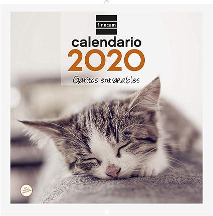 Finocam - Calendario de pared 2020 Imágenes 30x30 Gatitos español: Amazon.es: Oficina y papelería