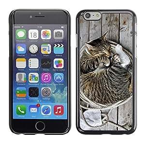 Be Good Phone Accessory // Dura Cáscara cubierta Protectora Caso Carcasa Funda de Protección para Apple Iphone 6 // Kitten House Cat American Bobtail