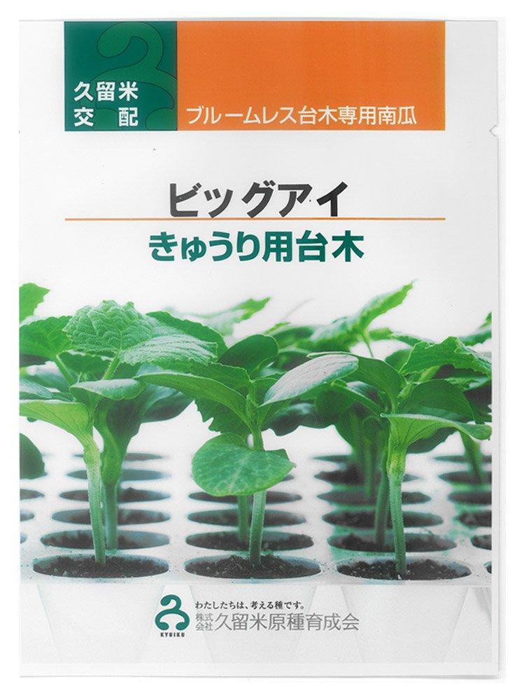 久育種苗 ビッグアイ(ブルームレス台木専用南瓜) 350粒詰 [久留米原種育成会] B012A6N9I6
