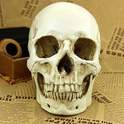 Skulls For Halloween (1:1 Realistic Life Size Human Anatomy White Resin Replica Skull Halloween Decor)