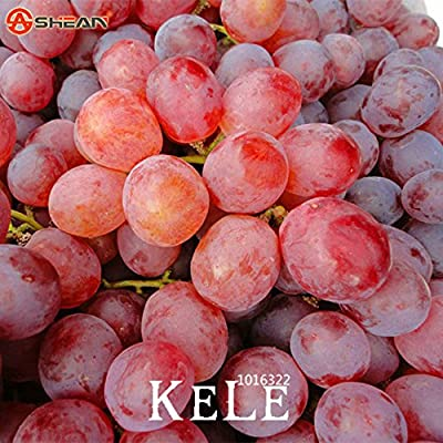 Big Promotion!100 PCS/Lot Sweet Red Grape Seeds Advanced Fruit Seed Natural Growth Grape Delicious Gardening Fruit Plants