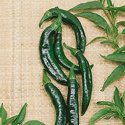 Pasilla Bajio Hot Pepper Garden Seeds - Non-GMO Vegetable Gardening Seed