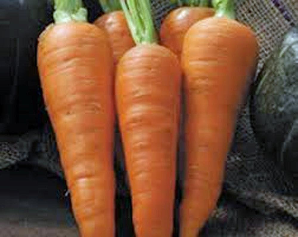 Las zanahorias, las semillas Danvers medio de largo, zanahoria ...