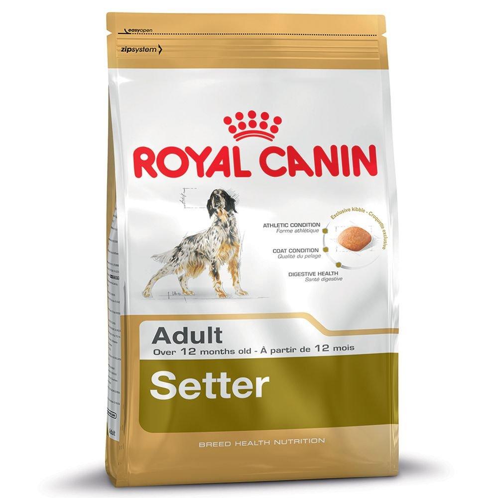 Royal Canin Dog Food Setter Adulto 12kg