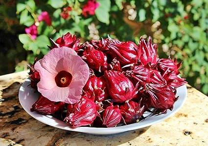 Amazoncom Hibiscus Sabdariffa Roselle Seeds 230 Organic Seeds