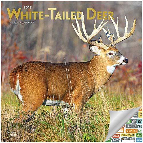 Whitetail Deer Calendar 2019 Set - Deluxe 2019 Whitetail Deer Wall Calendar with Over 100 Calendar Stickers (Whitetail Deer 2019 Gifts, Office Supplies) -
