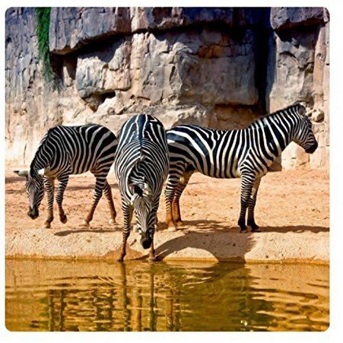 Zebras Picture On Acrylic Glas - Standpipe (11 x 11 inches) (Zebra-print-gläser)