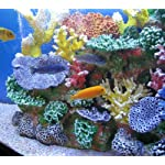 Instant Reef DM058 Artificial Coral Inserts Decor, Fake Coral Reef Decorations for Colorful Freshwater Fish Aquariums, Marine and Saltwater Fish Tanks 11