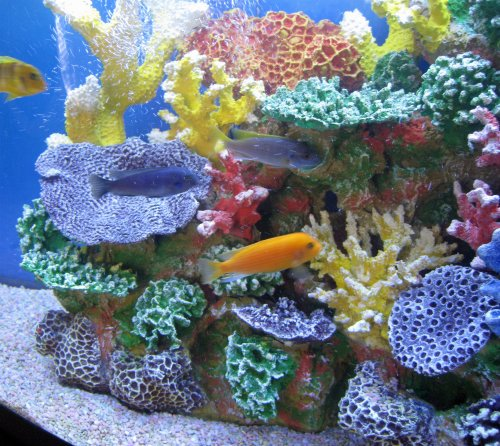 Instant reef artificial coral reef for aquarium decor for Aquarium decoration online