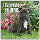 Staffordshire Bull Terrier Puppies 2017 - 12inch x 12inch Hanging Square Wall Photographic Dog Puppy Pet Planner Calendar (Multilingual Edition)