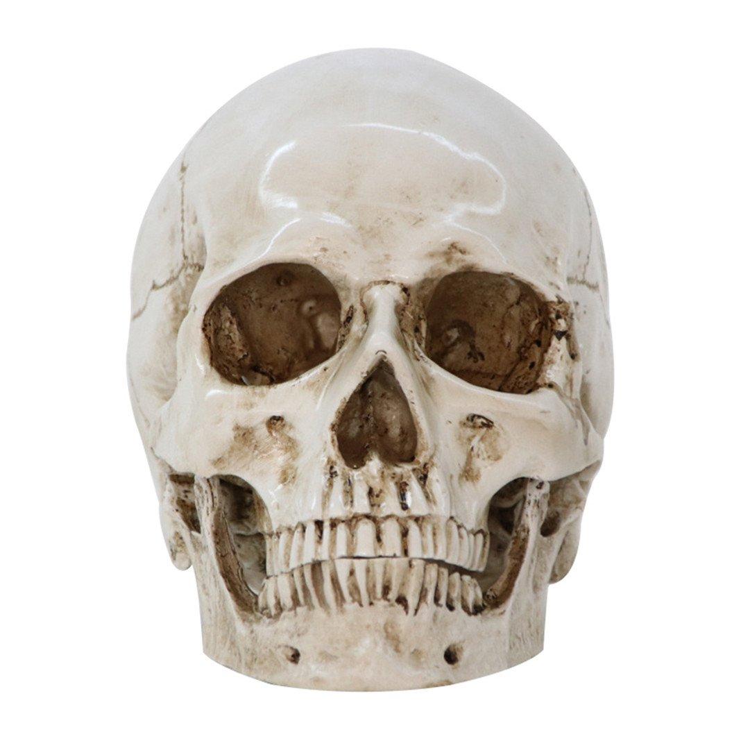 HEART SPEAKER Realistic Life Size Human Anatomy Resin Replica Skull Head Halloween Party Decor by HEART SPEAKER