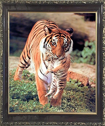 Wild Bengal Tiger and Cub Animal Nature Wall Decor Mahogany Framed Picture Art Print (20x24) (Bengal Tiger Framed)