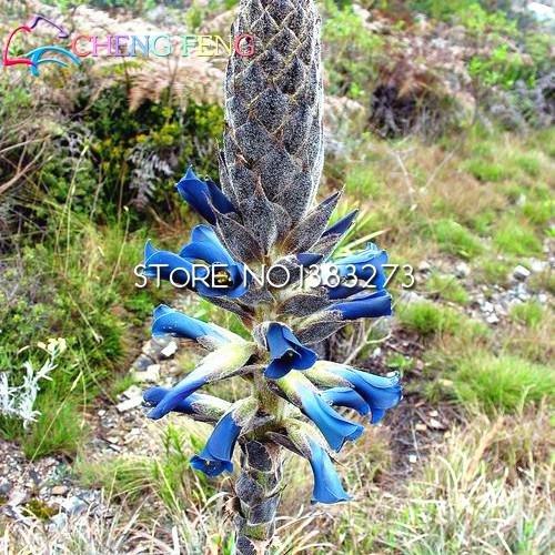 Sie nicht das einzigartige Allgemeine Samen 50pcs Seltene Topf Bonsai Blumensamen mehrjährigen Blumen Birnen Startseite Zier Pot Seed gesehen haben