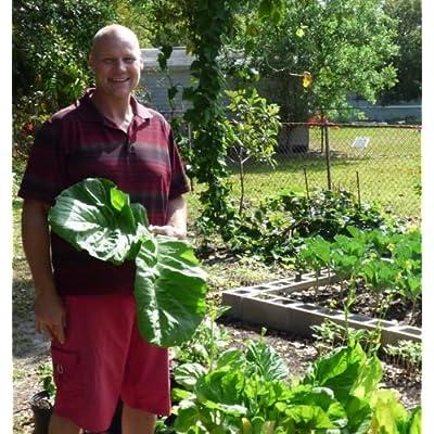 Mustard, Florida Broadleaf 2 LB seeds heirloom southern non gmo : Garden & Outdoor