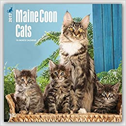 Books on maine coon cats