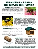 Welliver Outdoors Standard Mason Bee House