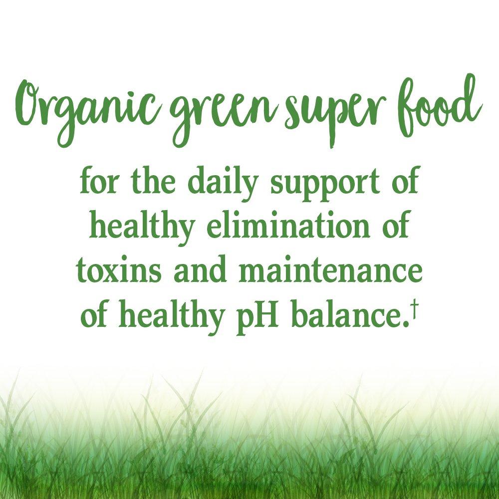 Garden of Life Vegan Green Superfood Powder - Raw Organic Perfect Whole Food Dietary Supplement, Original, 7.4oz (209g) Powder by Garden of Life (Image #2)