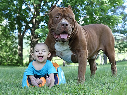 Giant Pit Bull Hulk & The Newborn Baby (Dynasty Series Watch)