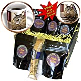 3dRose Cats, Maine Coon, Coffee Gift Baskets, 48-Ounce