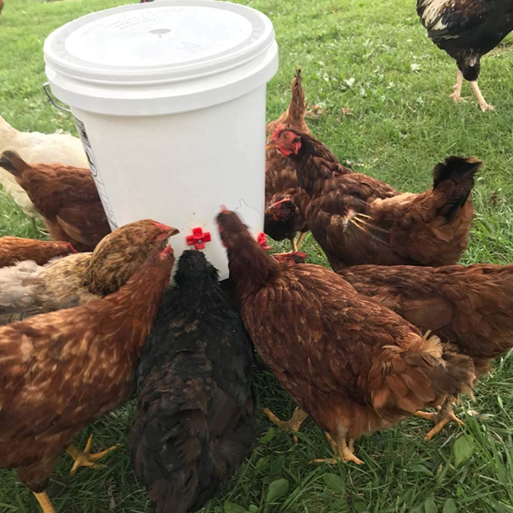 Tmand 12 Pack Horizontal Side Mount Automatic Poultry Nipples Clean Drinker Waterer For Chicken Or Quail